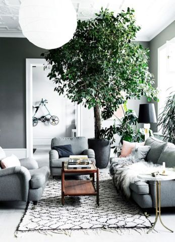 A massive plant captures the eye yet feels much like an effortlessly chic and integral aspect of this Scandinavian room.