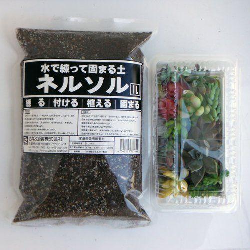 多肉植物切り芽(カット芽)10芽入りパッケージと固まる土(ネルソル)1リットル入りのセット