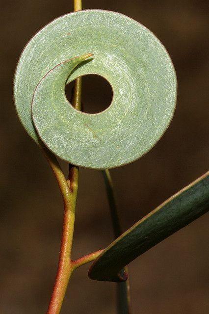 fabionardini: Leaf lollipop by kasia-aus on flickr Posted by Alice Ballard