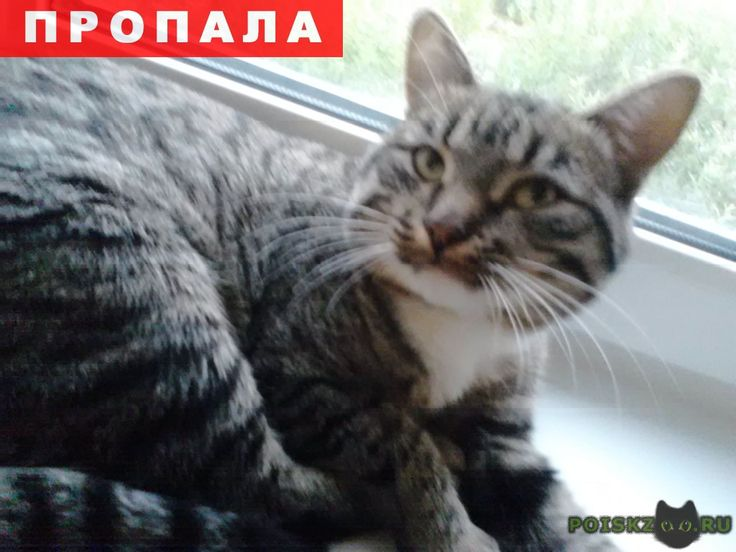 Пропал кот г.Иваново http://poiskzoo.ru/board/read32083.html  POISKZOO.RU/32083 Пропал кот в районе кольца шубиных, .. октября ушел гулять и больше не вернулся. кот молодой, большой, коричнево-черный в полоску, на шее и лапах белые пятна, особая примета-передняя левая лапа была сломана и не правильно сраслась и при беге он храмает.   РЕПОСТ! @POISKZOO2 #POISKZOO.RU #Пропала #кошка #Пропала_кошка #ПропалаКошка #Иваново