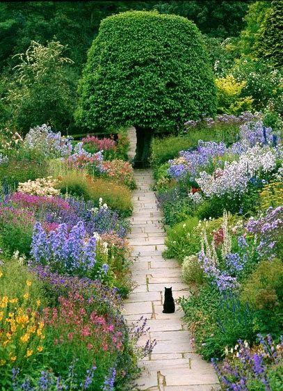 macska a kertben cica