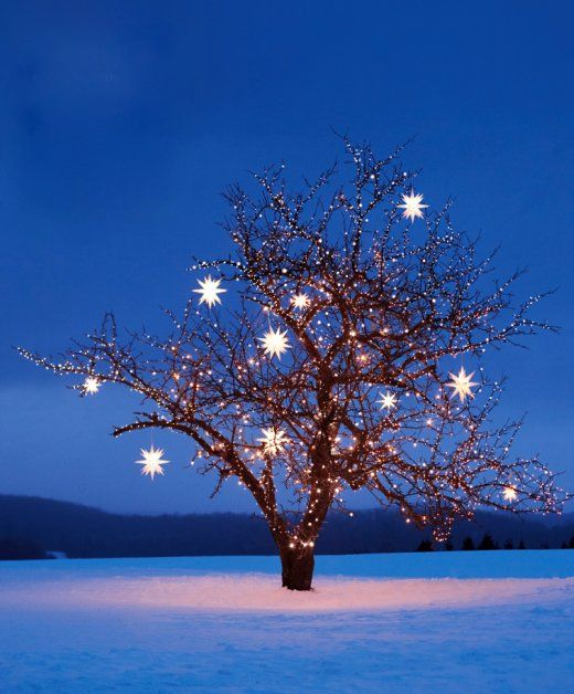 Holiday, Xmas Trees, Starry Night, Stars, Winter Wonderland, Christmas Lights, Twinkle Twinkle, Christmas Trees