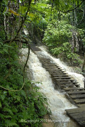 stair Jungle   ... image: Water cascading over old stairs up a Laotian jungle hillside