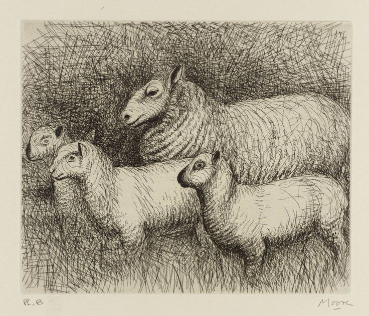 Pen drawing of sheep