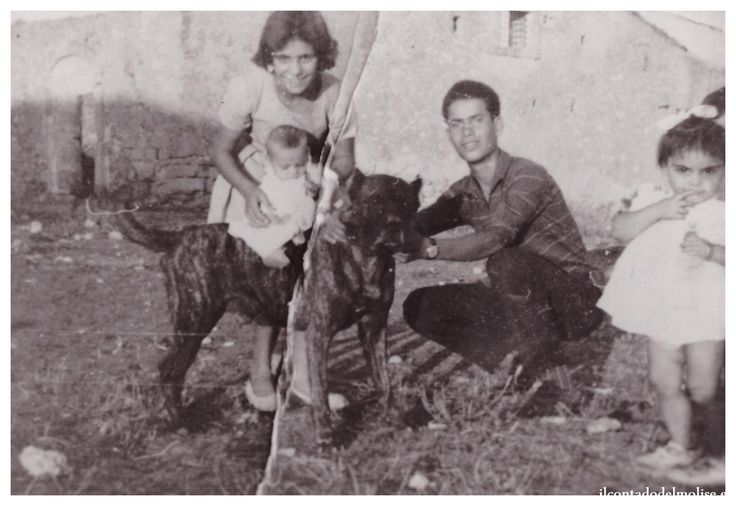 Questa è una selezione di antiche foto che ritraggono cani Corso antichi…