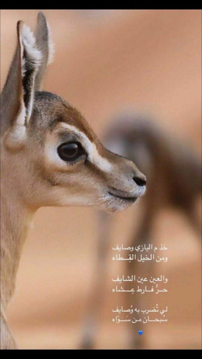 Pin By 7k51 On صور غزلان Cover Photo Quotes Animals Girly Images