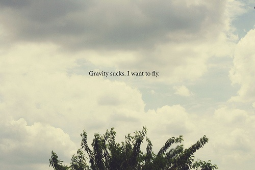 17 Best Images About I Just Want To Fly Away On Pinterest