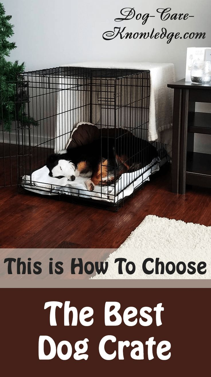 Best Dog Crate This is How To Choose The Right One Dog