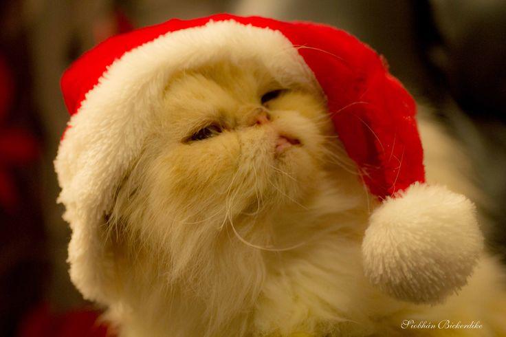 Persian Santa hat