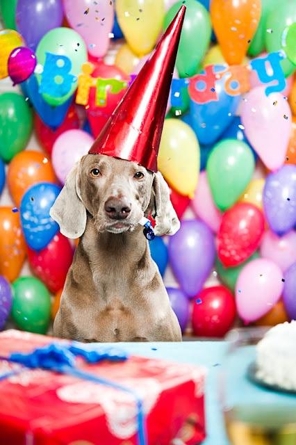42 best Happy birthday messages images – Weimaraner Birthday Cards