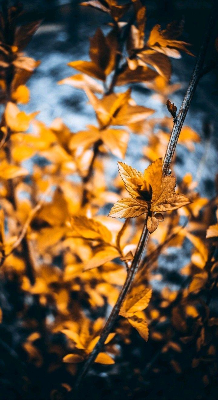 Seemly Fine How To Photoshop To Draw Photoshopskils Photographyphotoshopphotoeditin Blur Photo Background Photoshop Digital Background Love Background Images