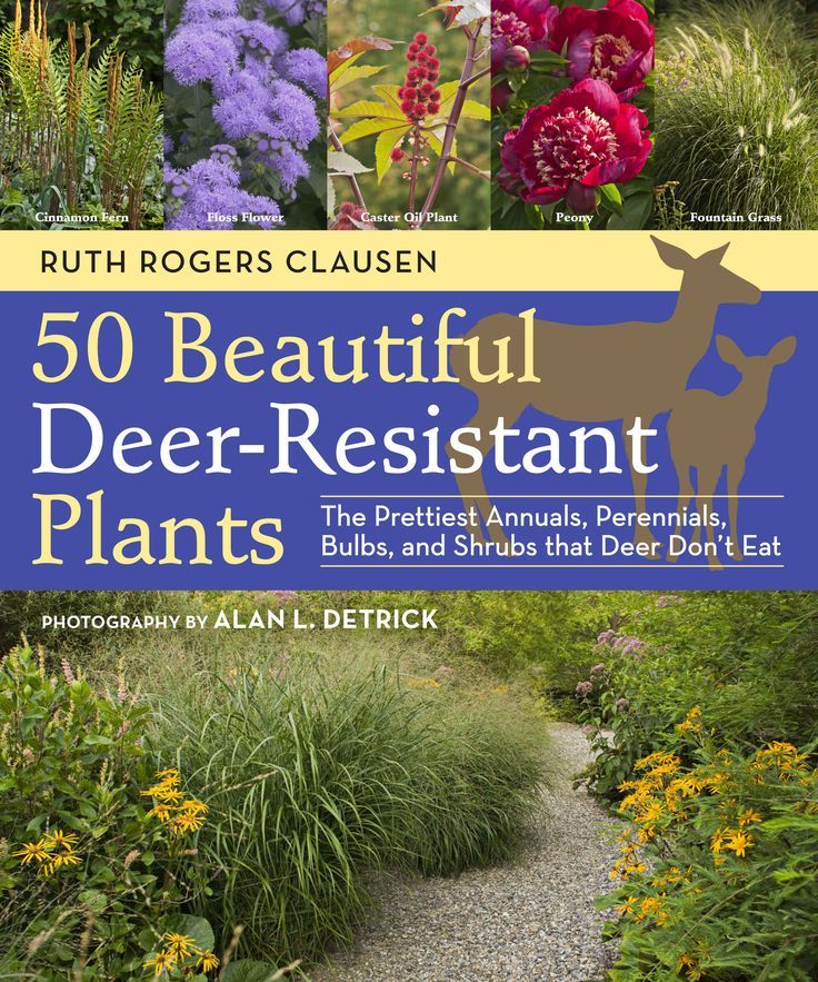Deer-Resistant Plants for Your Garden – Gardening – Mother Earth Living I so need to know this