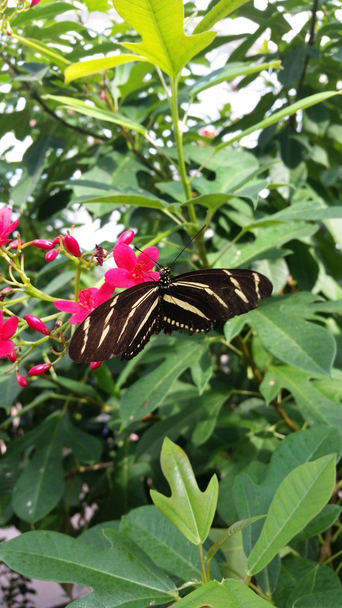 The butterflies at Butterfly Wonderland in Scottsdale Arizona are amazing! It is a must-see for RV camping trips in Arizona. CampingForFoodiesKim (@Camping4Foodies) | Twitter