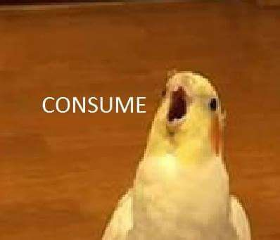 5bfd94a73d8bdec0acff0a5ad0e96892 bad memes bird 48 best bird memes images on pinterest parrots, animales and