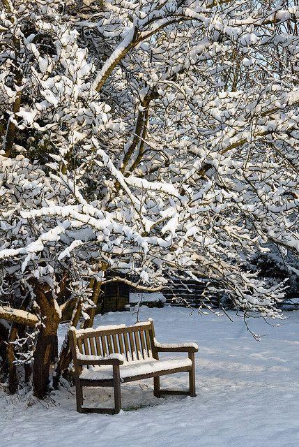 Garden bench in a winter garden...take a deep breath....winter is coming!