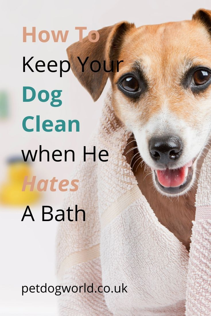 How To Keep Your Dog Clean When He Hates A Bath Dog Cleaning