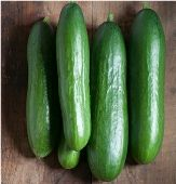 "2002 All-America Selections Winner! 58 days. Cucumis sativus. (F1) Plant produces good yields of non-bitter burpless and seedless 8"" long glossy dark green cucumbers. Cucumbers are tender, crisp, sweet, and bitter-free. It is a gynoecious and parthenocarp"