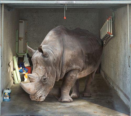 rhinoceros garage door mural nothing deters burglars like having a rhino in the garage