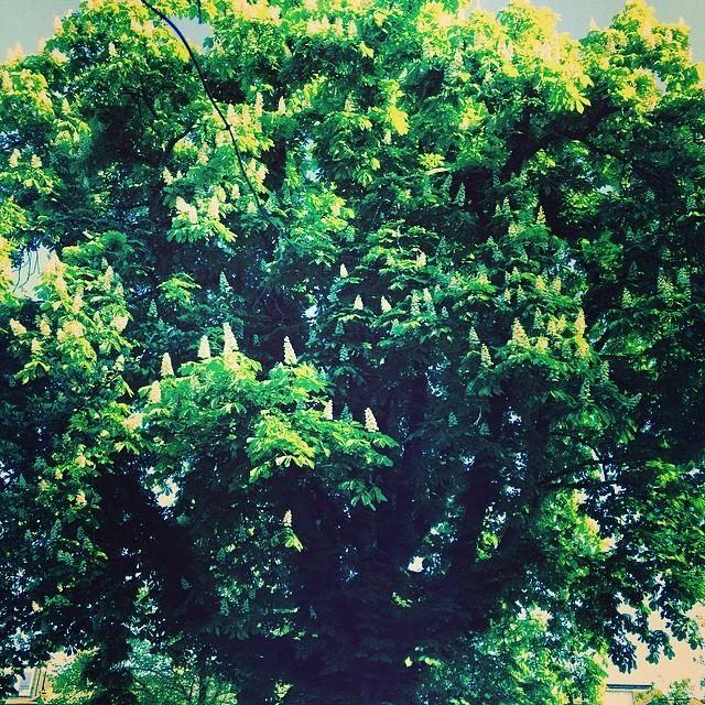 One Green Day #treeoflaxmi 07.45.18.4.14