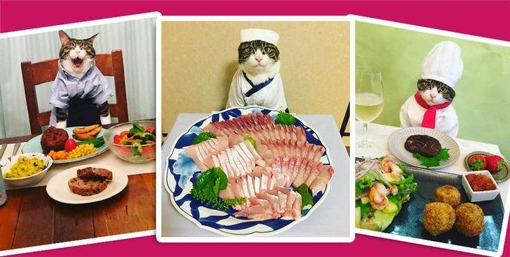 O pet usa um traje diferente toda noite para jantar com sua dona