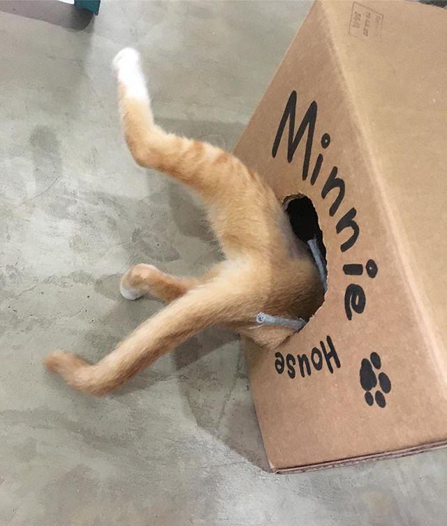 頭からdive‼️おてんばすぎる‼️笑#chuty#srilanka#temple#cat#cats#catstagram#cute#cutie#kitty#eyes#gato#gatto#kucing#katze#popoki#happy#Love#straycat #minnie#愛娘#愛猫#愛猫家#ミニー #ミニーちゃん#女の子#gril#おてんば娘 #大好き#かわいい #親バカ部