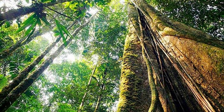 bioma-floresta