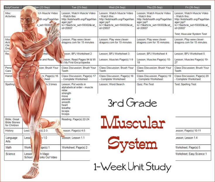 Muscle study guide - Human Anatomy And Physiology with ...
