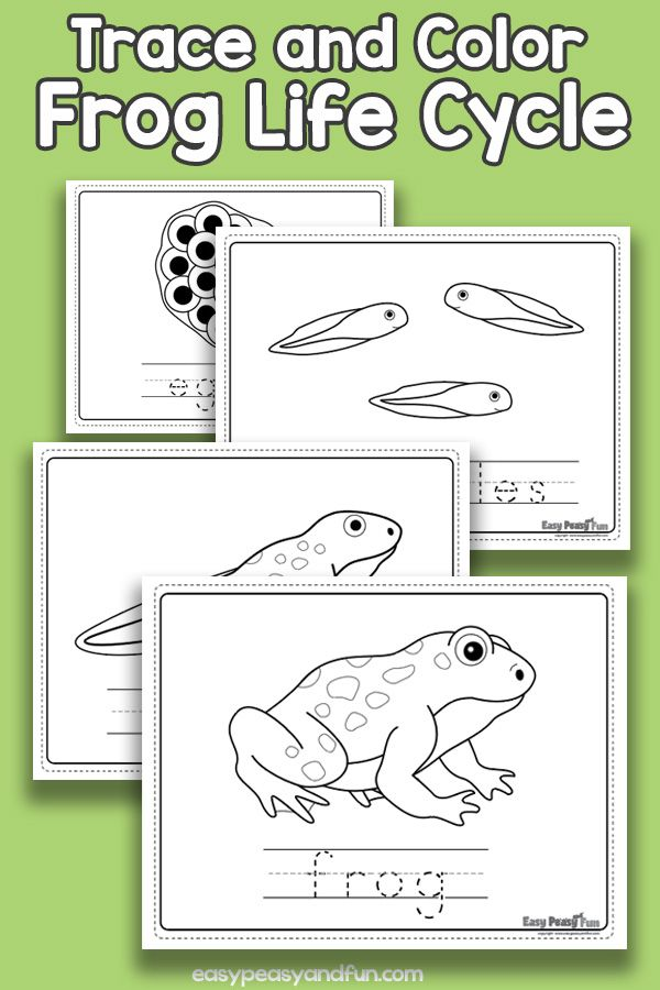 Vocabulary Frog Life Cycle Coloring Pages Frog Life Lifecycle Of A Frog Life Cycles