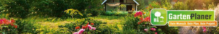 Für den Steingarten • Purpurrote Blüte • Pflegeleicht ✓ Matten-Thymian Rot Topf-Ø ca. 9 cm x 9 cm Thymus ➜ Steingarten-Stauden jetzt bei OBI kaufen!