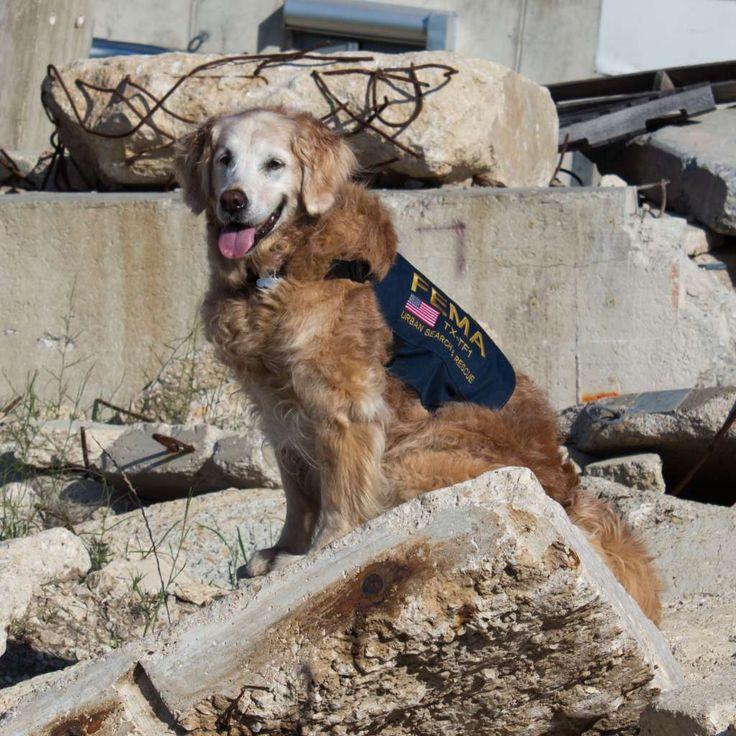 Volunteer Sa Dog Rescue