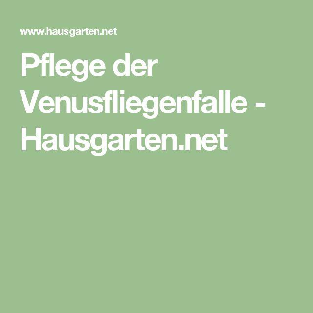 Pflege der Venusfliegenfalle - Hausgarten.net