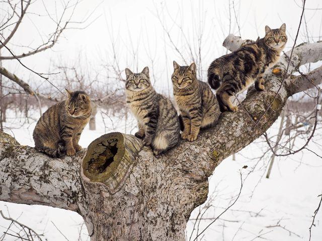 足並み揃えて兄弟で探検冒険の始まりです。ⓒMitsuaki Iwago