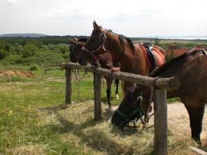 Rozmaring lovasudvar es szallo
