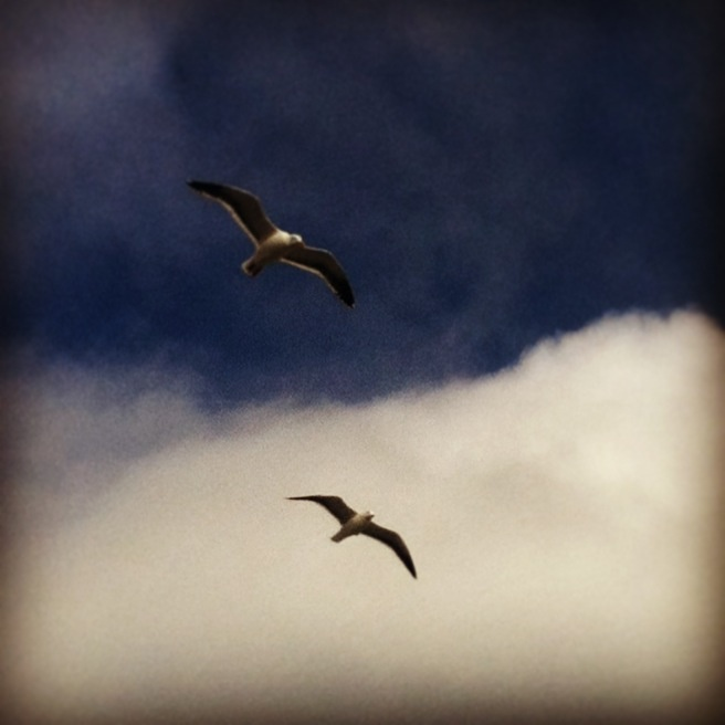 Two birds I took a pic of flying over our boat in San Francisco California
