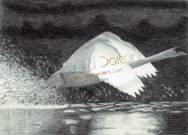 The flight of the swan. Black and white pencil drawing