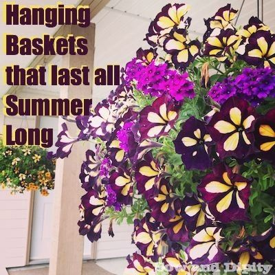 43 best ideas about hanging baskets on pinterest hanging - Summer hanging basket ideas ...