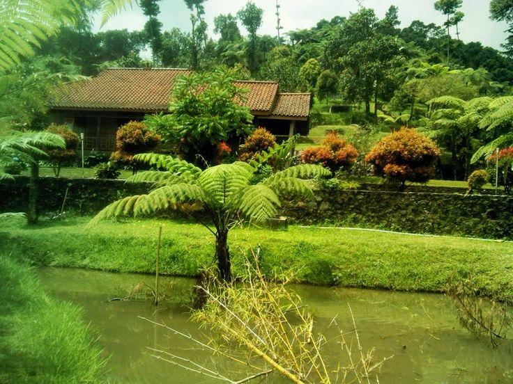 villa omah wong