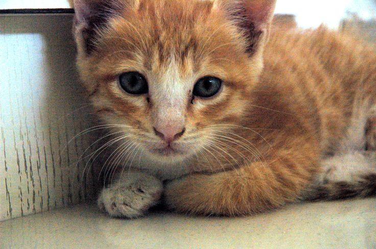 Cat in the corner :P