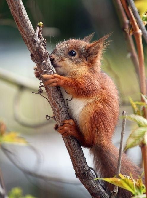 Baby Squirrel With the Cuteness! #EasyNip