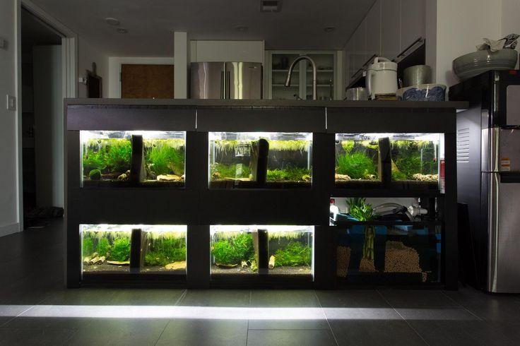 6 x 10g shrimp rack under kitchen countertop 56k page for Fish tank rack
