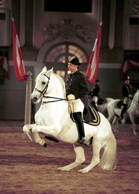 Vienna: Spanish Riding School...Lippizzaner Stallions. Beautiful!! My bucket list to see them at the palace.Front Row Center!!!