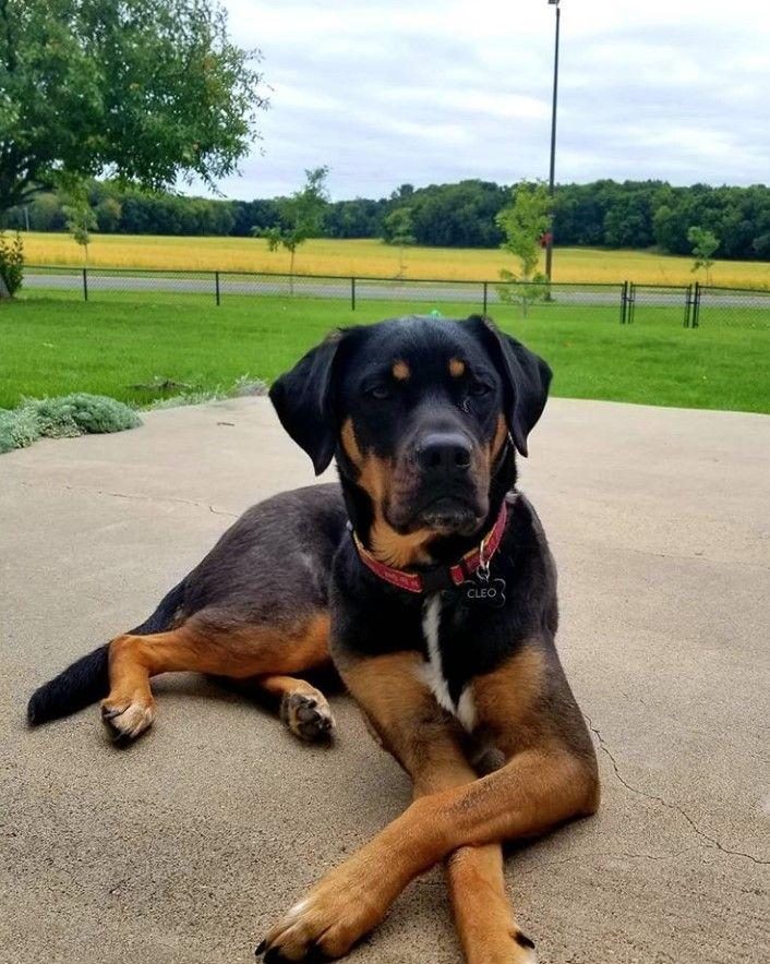 33 Beagle Mixed Breeds List Of Beagle Mix Breed Dogs Petpress