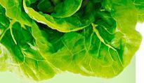 Kombucha thread; raw food web site/forum