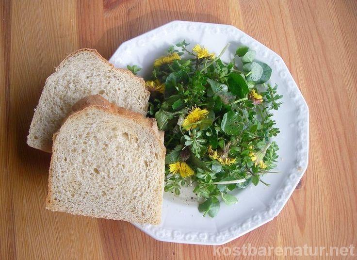 Im Vorfrühling sind einige Wildpflanzen schon in größeren Mengen zu finden, so dass es für einen leckeren Salat reicht. Hier sind fünf meiner Favoriten.: