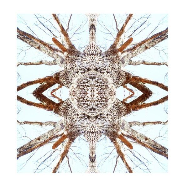Paul Cook and his Universe, Mondo Curio | Trendland: Fashion Blog & Trend Magazine