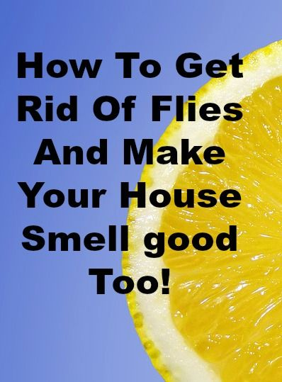 how to get rid of flies and make your house smell good too