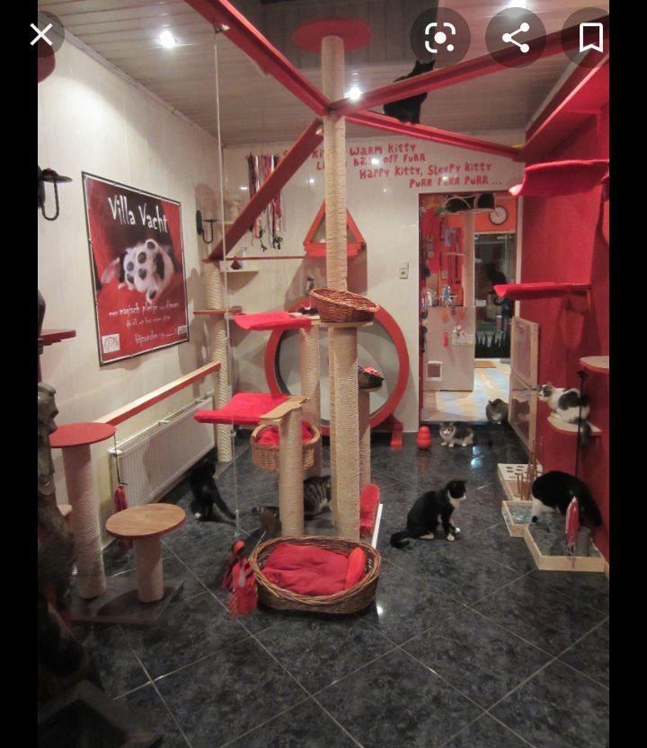 Shinmonodeku House Part 1 Cat Room Cat House Diy Cat Diy