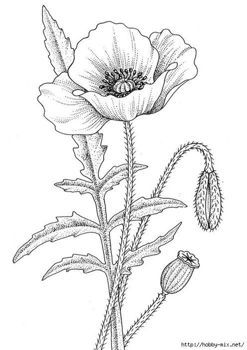 poppy-11203 (495x700, 169Kb)