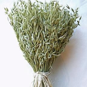 This large, one pound stack of avena oats makes a wonderful, feathery looking natural display. The avena oats one pound stack with stand on its own without the need for a vase or container, so it can make an instant centerpiece.
