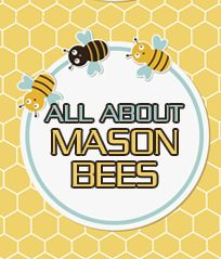 Guide to caring for Mason Bees